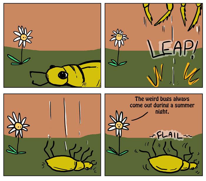 Bah, Dumb bug