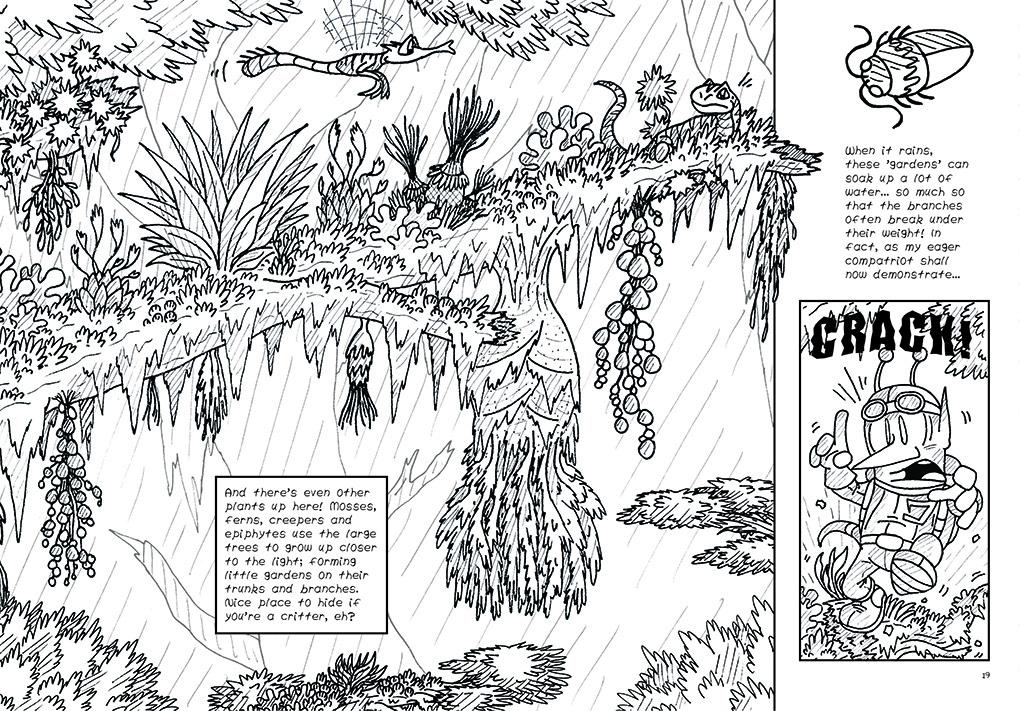 Rainforest, Ho! 9