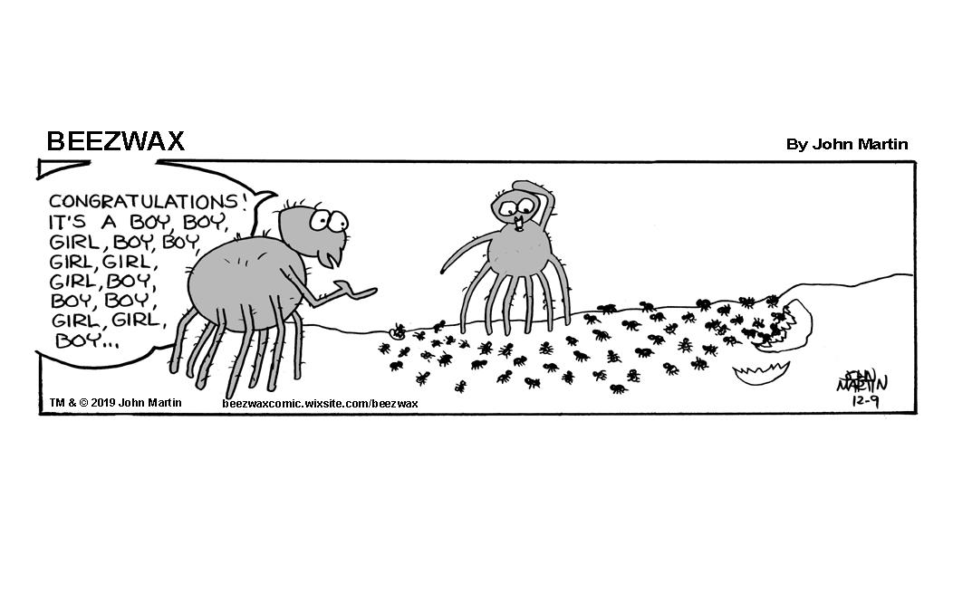 spider birth