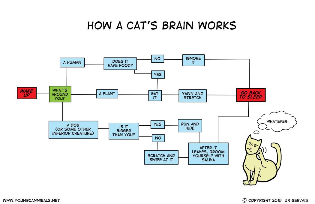 Feline Algorithms