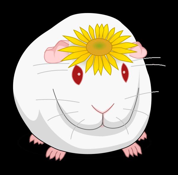 Guinea Pig Wiki