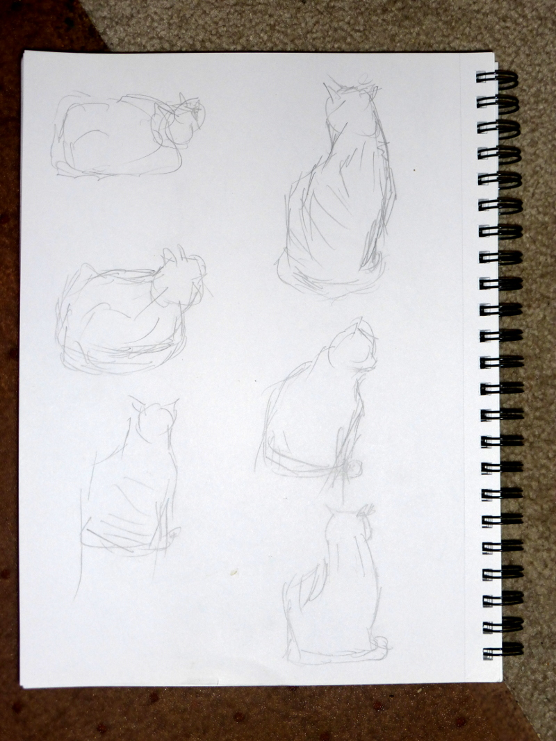 Cat sketches from life