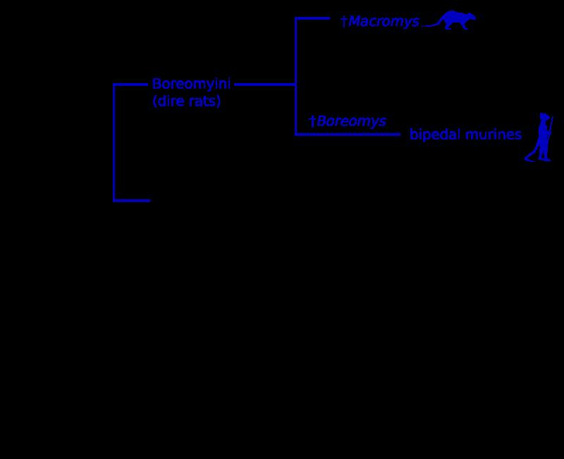Tribes of Murinae