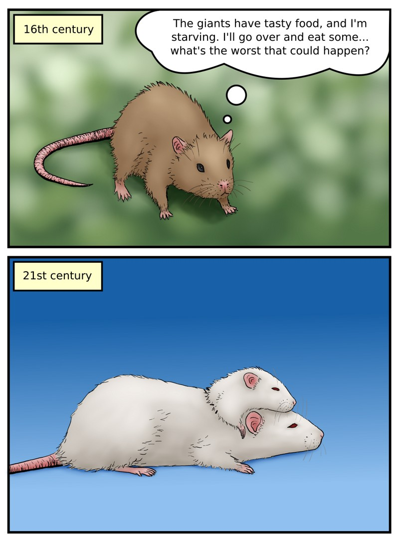 Domestication of the brown rat
