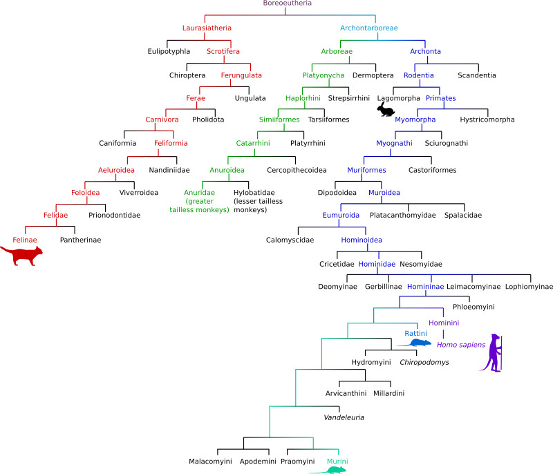 More family tree silliness