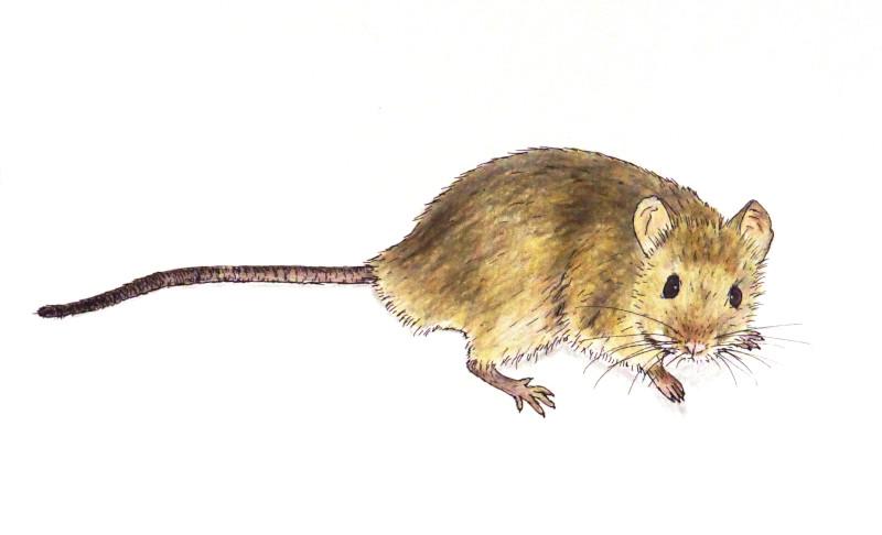 Pencil mouse
