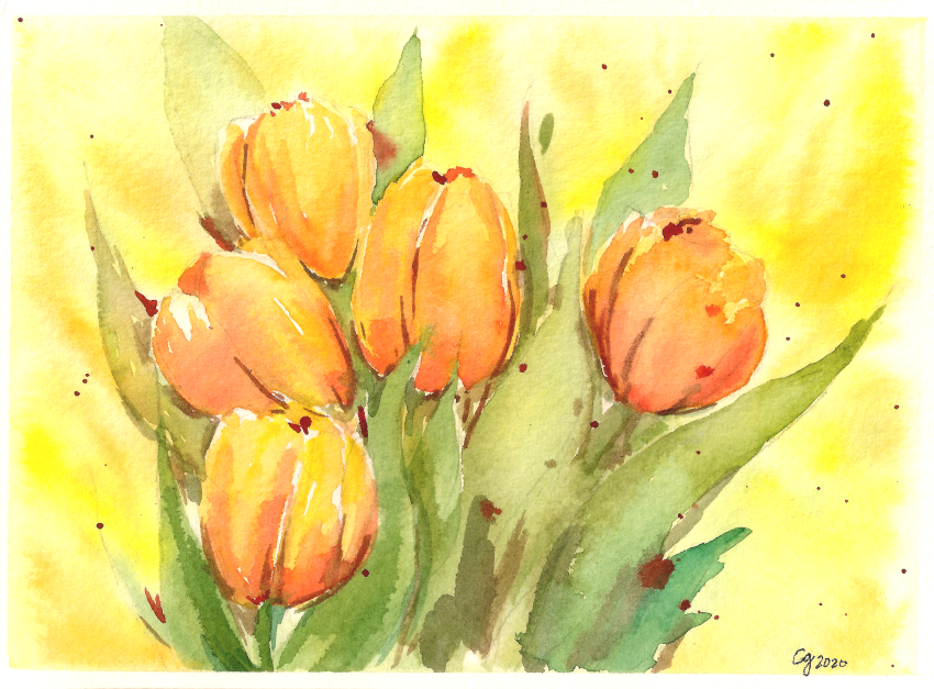 [Intermission] Orange Tulips