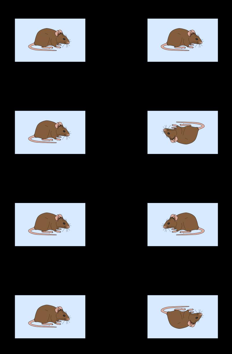 Symmetries of a rectangle