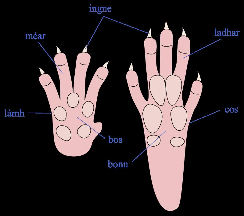 Body parts II