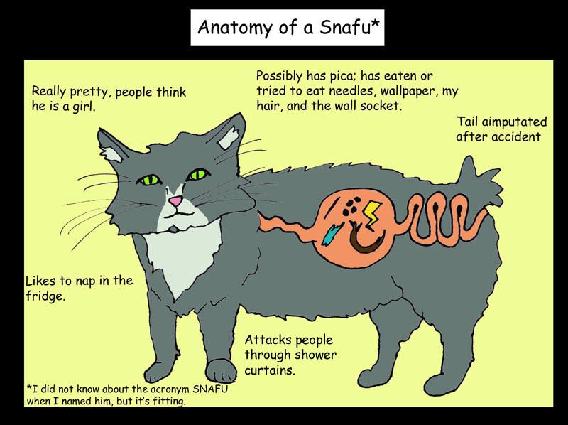 Anatomy of a Snafu
