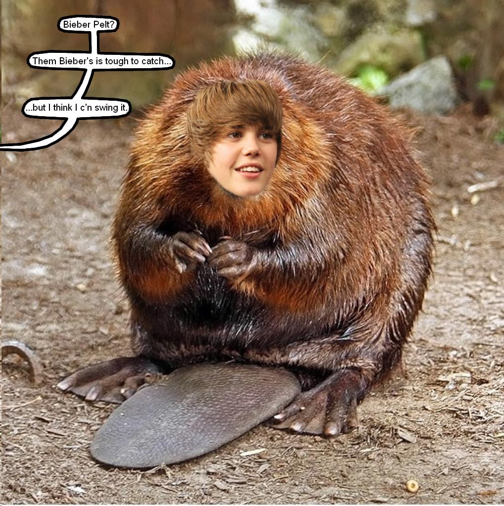 Bieber Pelt