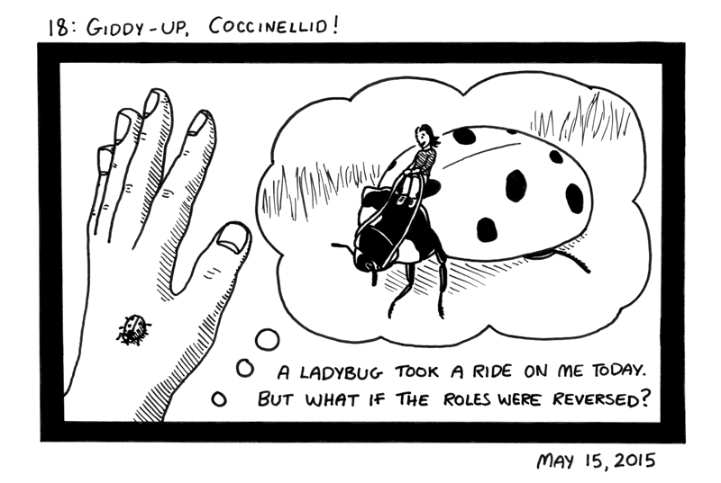Giddy-up, Coccinellid!