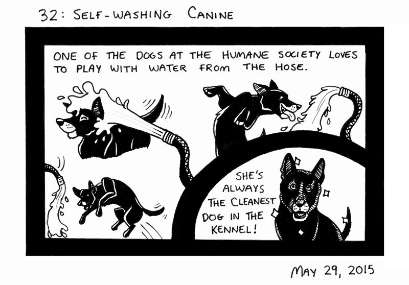 Self-washing Canine