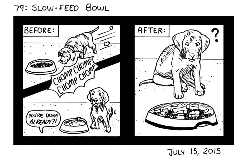 Slow-Feed Bowl